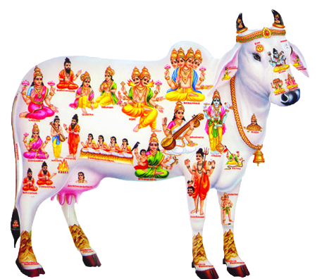 (English) INDIAN COW – A MOVING TEMPLE (documentary)