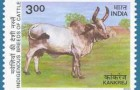 Indian Cow Stamps